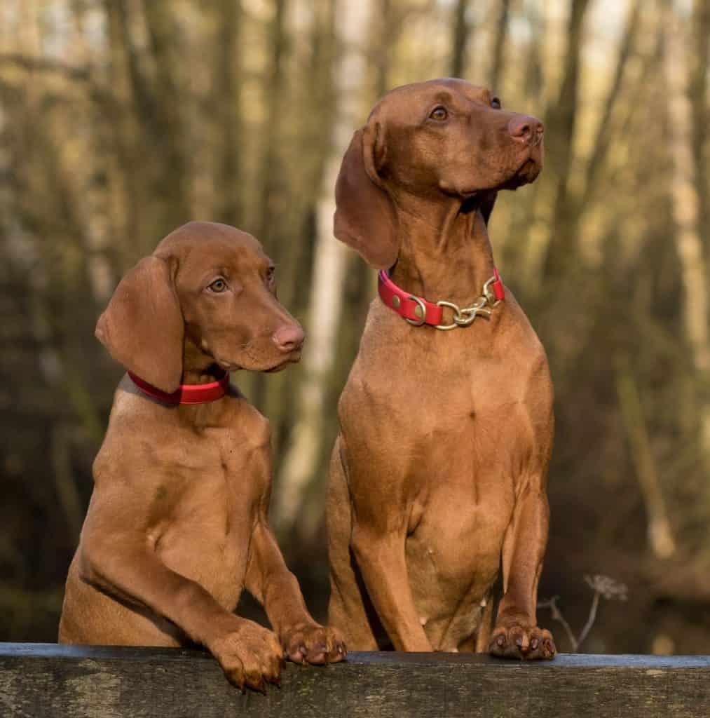 Homeowners Association Pet Restrictions